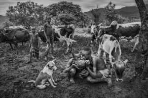 PhotoVivo Gold Medal - Baolan Liu (China)  Tribal Grazing Days 3