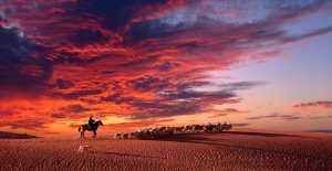 PhotoVivo Gold Medal - Xiang Liu (China)  Return Under The Sunset