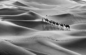 PhotoVivo Gold Medal - Jing Gu (China)  Dream Camel Bell