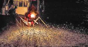 APU Merit Award E-Certificate - Woodpecker Huang (Taiwan)  Firefishing