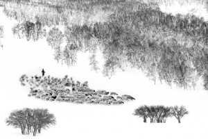 PhotoVivo Gold Medal - Zhongmin Zhang (China)  Winter Grazing