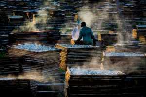 PSA HM Ribbons - Huu Hung Truong (Vietnam)  4- Drying Fish