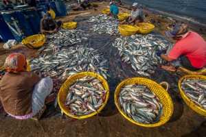 APU Summer Merit Award E-Certificate - Shehan Trek (Sri Lanka)  Fish Market