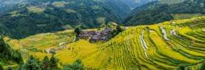 Circuit Merit Award e-certificate - Aizhen Jiang (China)  Terraces In Autumn