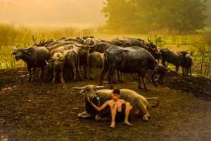 PhotoVivo Gold Medal - Yanfei Zhu (Malaysia)  A Cow Boy