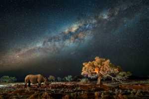 APAS Gold Medal - Li Wan (China)  Rhinoceros