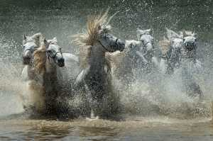Golden Dragon Photo Award - Jianhui Liao (China) - Boiling