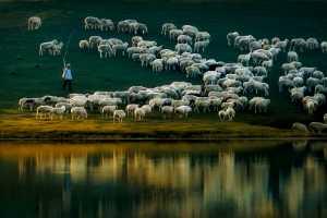 APAS Honor Mention e-certificate - Jiangchuan Tong (China)  Shepherd