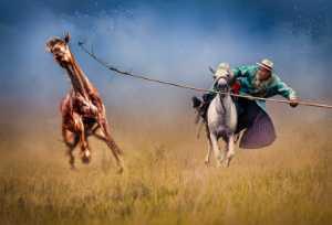 Circuit Merit E-cert - Wei Ping Peng (Australia)  Catch A Horse