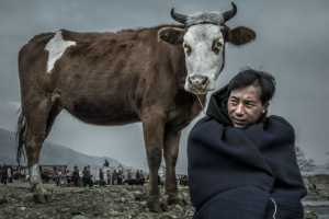Certificate of Nomination - Xiao Xiao (China)  Man And Cow