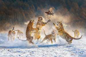 PhotoVivo Gold Medal - Yuk Fung Garius Hung (Hong Kong)  Jump For Lunch