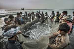 ICPE Gold Medal - Yanping Qiu (China)  Fish Harvest