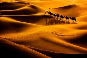 APU Gold Medal - Jing Gu (China)  Camel Shadow