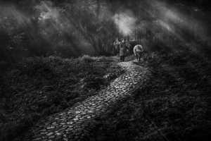 PhotoVivo Gold Medal - Xinmin Zhang (China)  The Path