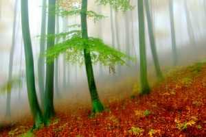 APU Honor Mention e-certificate - Aleksander Cufar (Slovenia)  Forest-A80