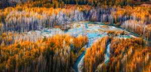 APAS Honor Mention e-certificate - Yanbin Wang (China)  Autumn Forest