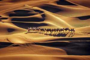 APU Honor Mention e-certificate - Jiangchuan Tong (China)  Desert Camels
