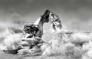PhotoVivo Gold Medal - Ye Wei (China)  Training Horses