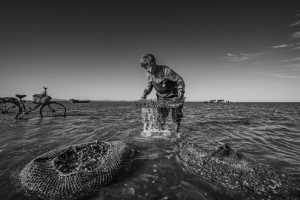 PhotoVivo Gold Medal - Xiuli Wang (China)  Clean Out 1