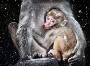 Circuit Merit Award e-certificate - Wing Chung Kenneth Leung (Hong Kong)  Monkey In Snow