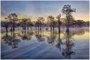 PhotoVivo Gold Medal - Thomas Lang (USA)  Caddo Lake At Dawn