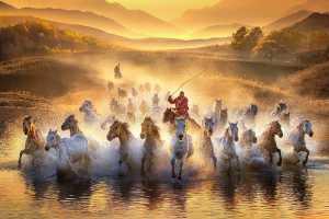 PSA Gold Medal - Yuk Fung Garius Hung (Hong Kong)  Running Horses 1