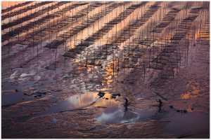 SIPC Merit Award - Thomas Lang (USA)  Catch Of Morning Light