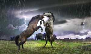 APU Gold Medal - Risheng Liu (China)  Two Fierce Horses