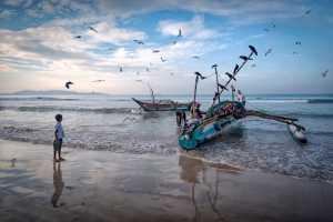 PhotoVivo Gold Medal - Marian Plaino (Romania)  Catch Of The Day