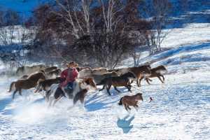 PhotoVivo Honor Mention e-certificate - Ka Yi Winnie Tse (Hong Kong)  Winter Horses Migration