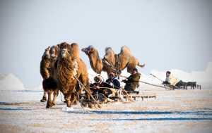 RPST Gold Medal - Hugo Chan (USA)  Running Camels In Snow