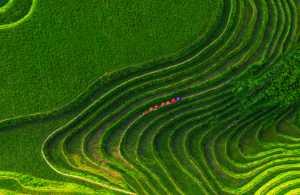 Circuit Merit Award e-certificate - Jun Zhao (China)  Yao Village