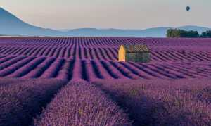 APU Gold Medal - Katherine Wong (Canada)  Balloon Over Lavender Field