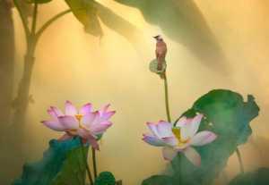 Circuit Merit Award e-certificate - Yan Wong (China)  Bird And The Lotus