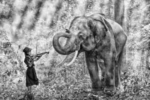 APU Honor Mention e-certificate - Say Boon Foo (Malaysia)  Elephant Love Music