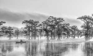 PhotoVivo Gold Medal - Louise Xie (USA)  Caddo Lake