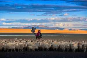 ICPE Gold Medal - Chongfeng Wu (China)  Tending Sheep 1