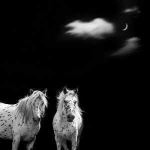PhotoVivo Gold Medal - Weining Lin (China)  Fine Horse 13
