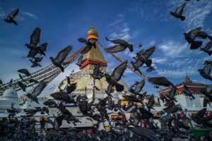 PSA Gold Medal - Chuanzhong Li (China)  Bodhnath Stupa
