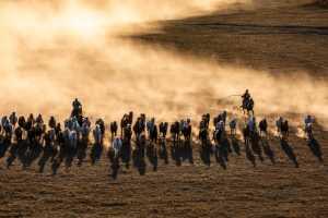 PhotoVivo Gold Medal - Luying Wang (China)  Chasing After