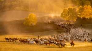 Raffles Merit Award E-Certificate - Le Ming Huang (China)  Running Horses