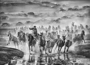 FIP Gold Medal - Arnaldo Paulo Che (Hong Kong)  Running Horse 10