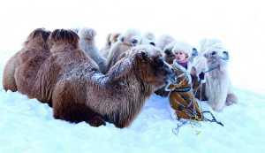 FIP Ribbon - Shaoqing Shen (China)  Chilly Winter