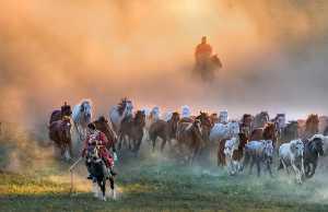 PhotoVivo Gold Medal - Wendy Wai Man Lam (Hong Kong)  Running Horses 11