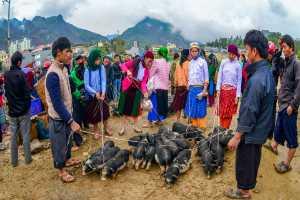 Honor Mention - Kim Cuong Nguyen (Vietnam)  Market Of Cattle