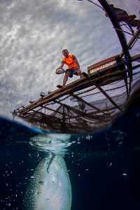 APU Gold Medal - Sofi Aida Sugiharto (Indonesia)  Whale Shark Feeding