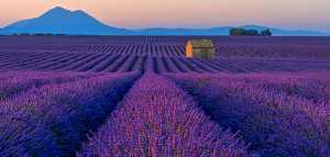 Circuit Merit Award e-certificate - Katherine Wong (Canada)  Lavender Field At Dawn