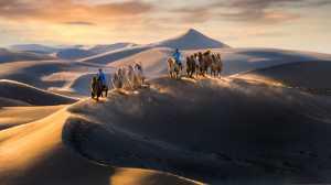 APAS Gold Medal - Wei Zeng (China)  Desert Visitors