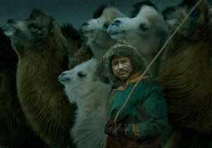 RPST Honor Ribbon - Xiaoxi Liao (China)  Camels