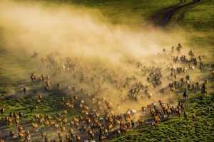 APAS Honor Mention - Ping Xu (China)  Horses Galloping